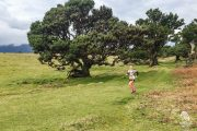 Fanal Ancient Forest Running Tour